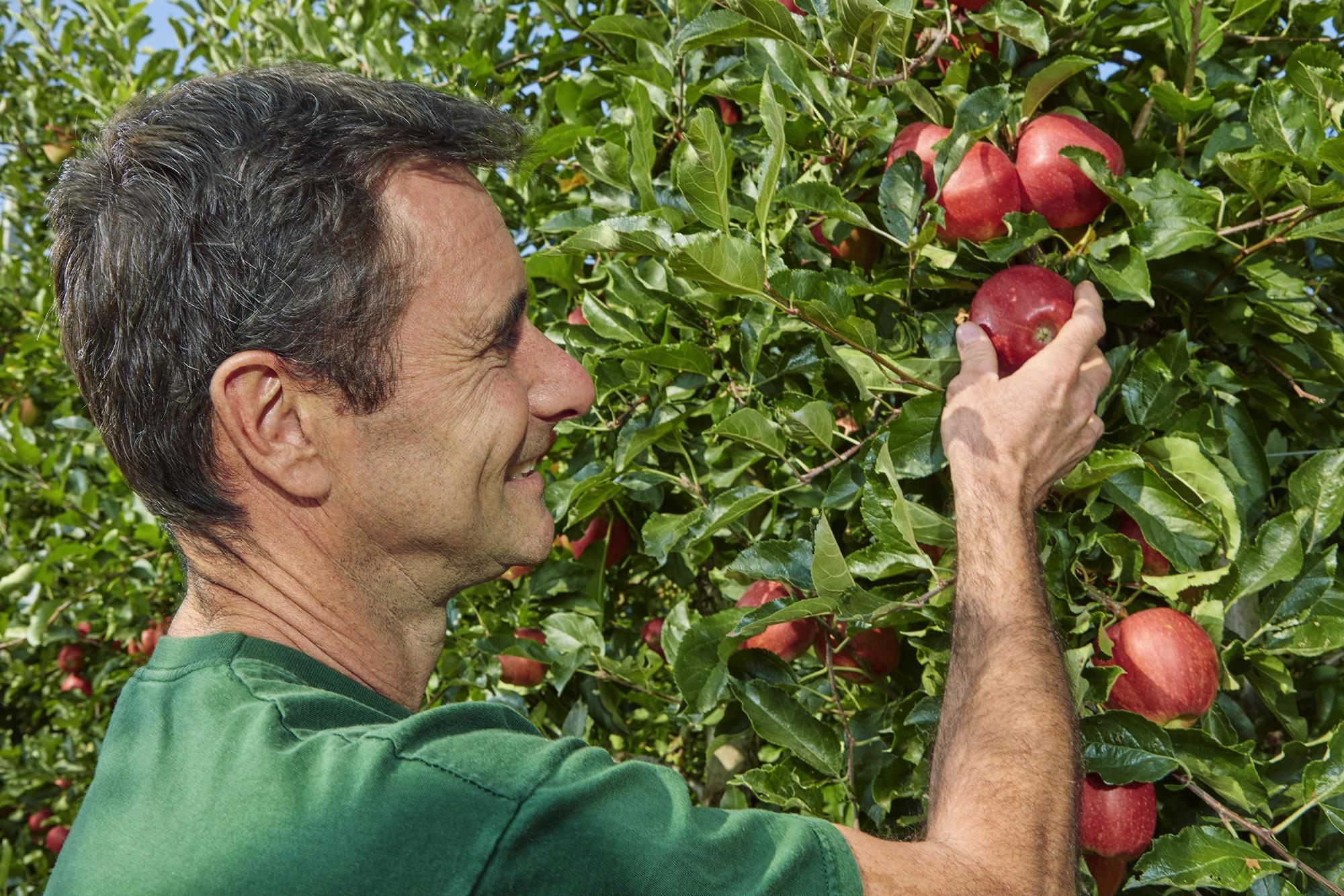 Aktuelles zur Apfelernte